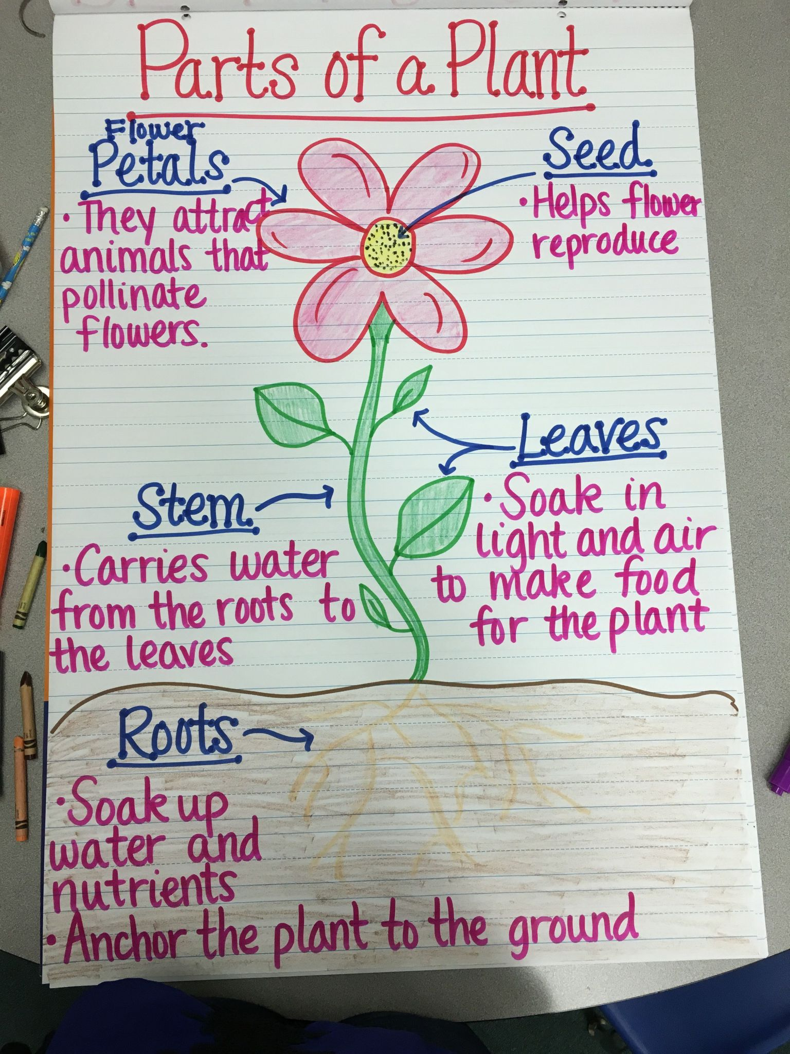 Plant Structure And Function Worksheet