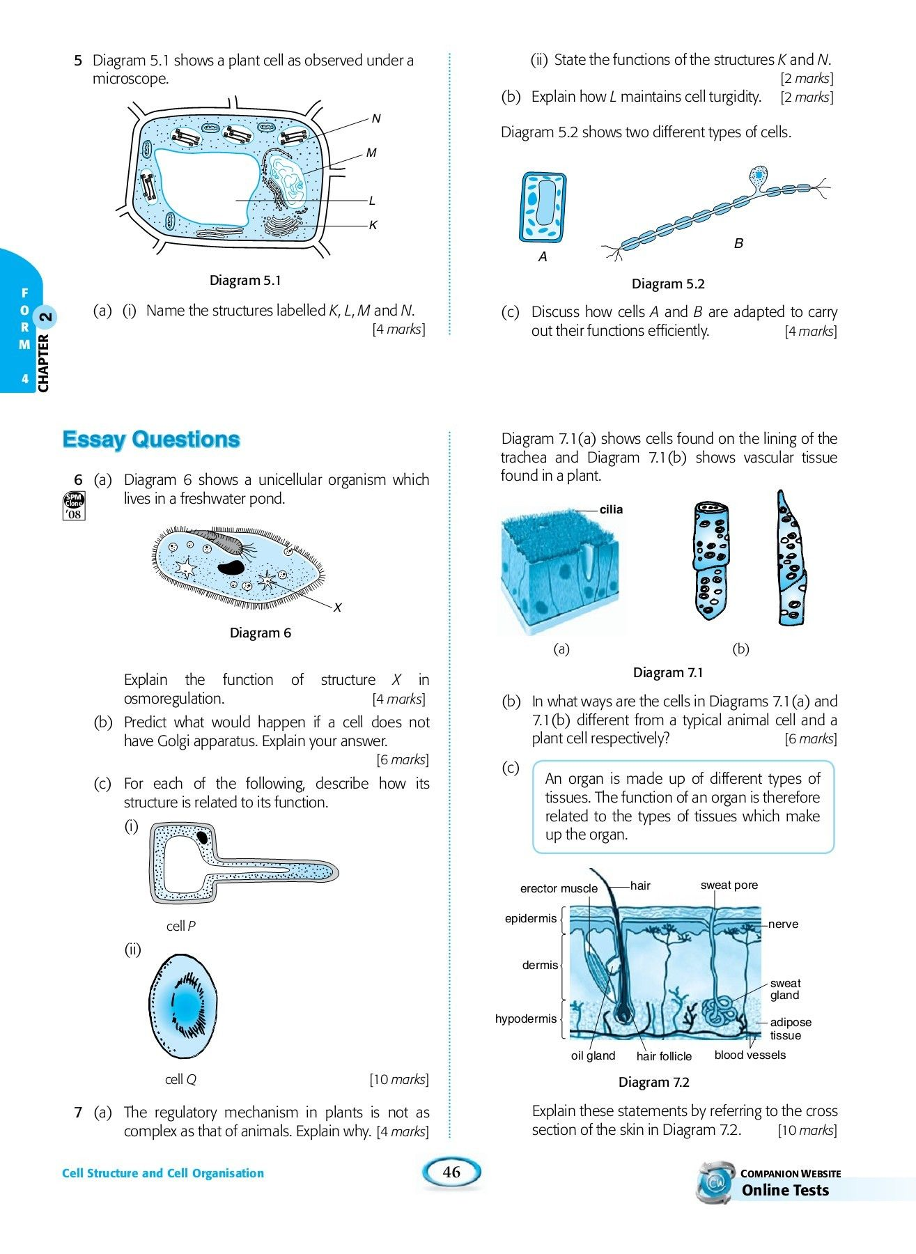 Pond Water Microscope Lab Worksheet