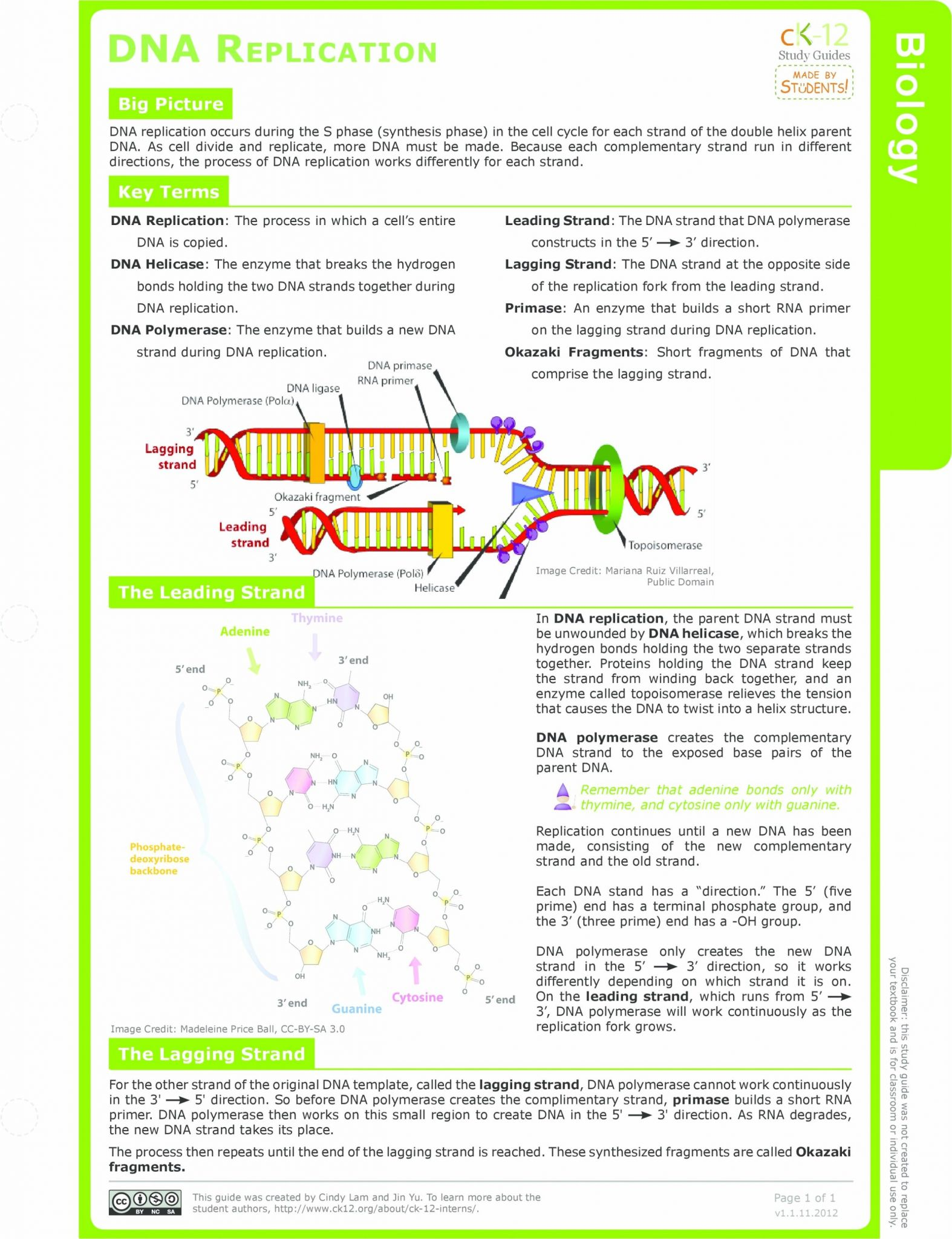 Say It With Dna Protein Synthesis Worksheet Answer Key