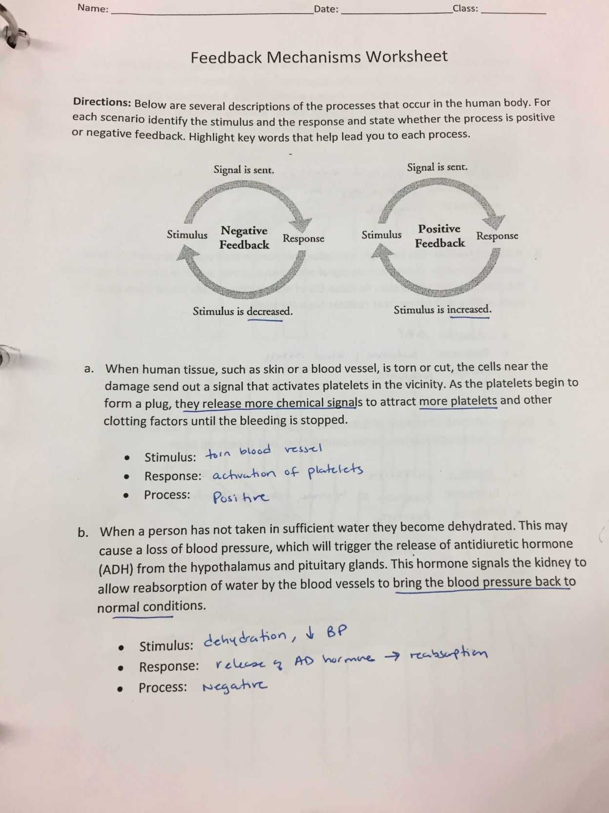 Reproducible Student Worksheet