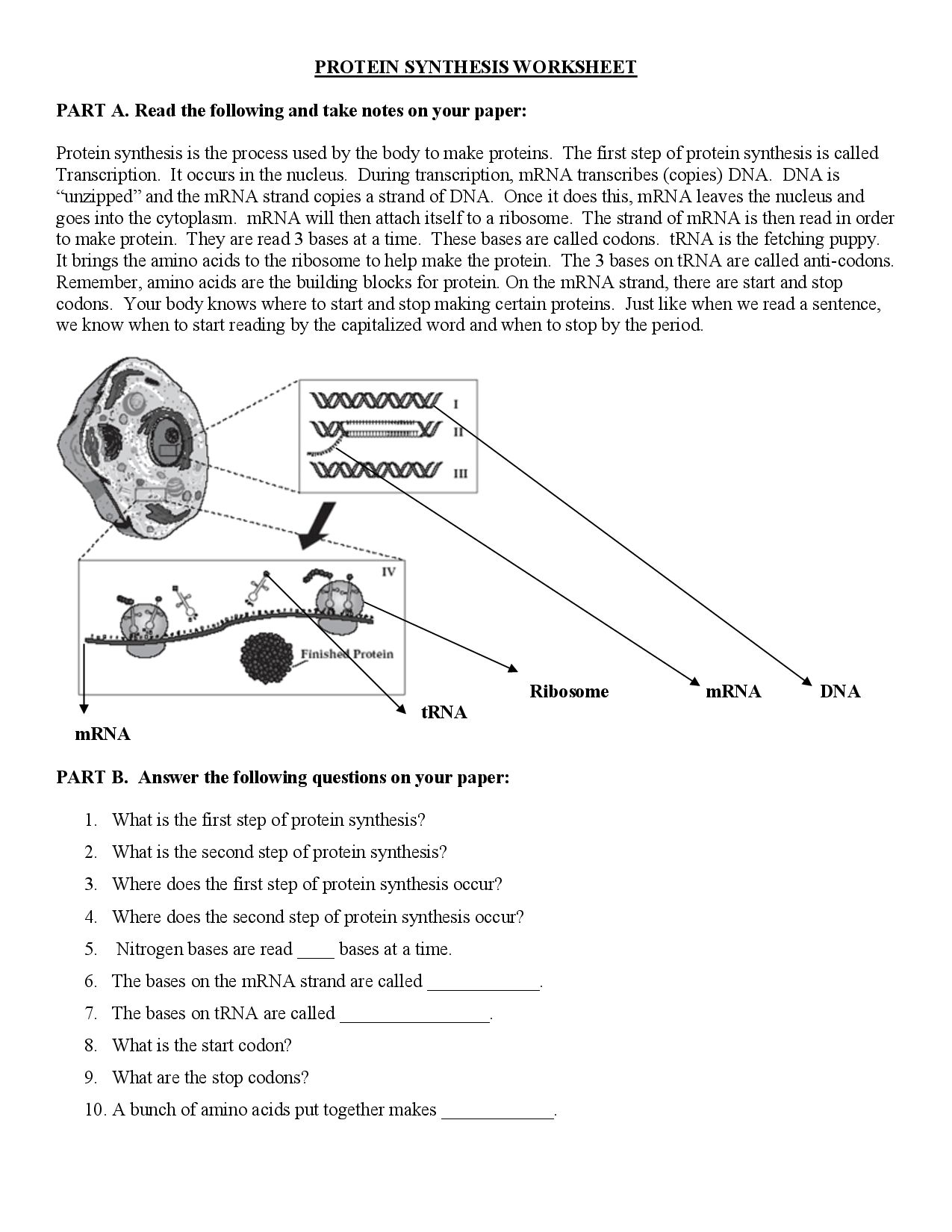 Say It With Dna Protein Synthesis Worksheet