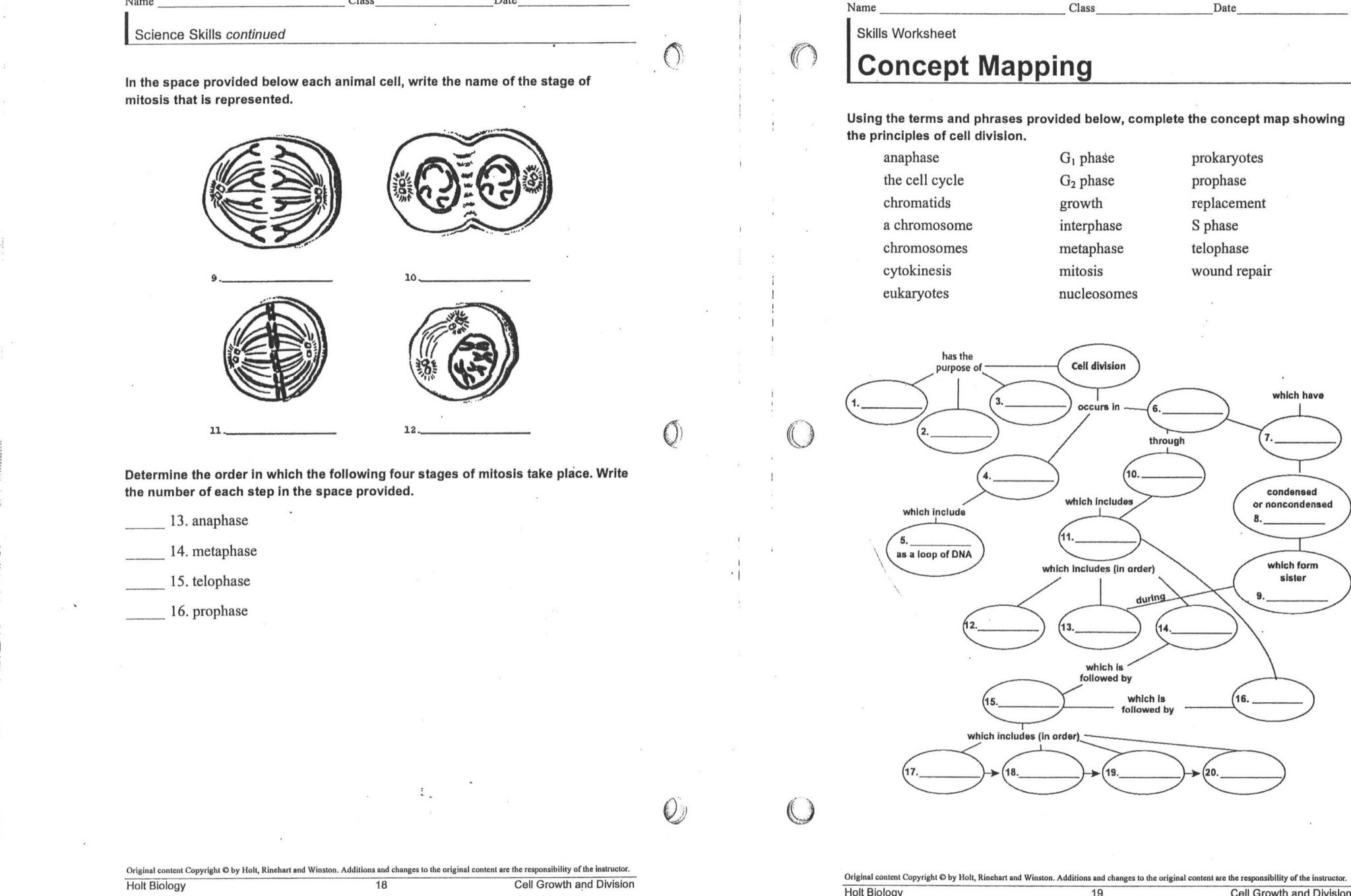 Skills Worksheet Concept Mapping Answers