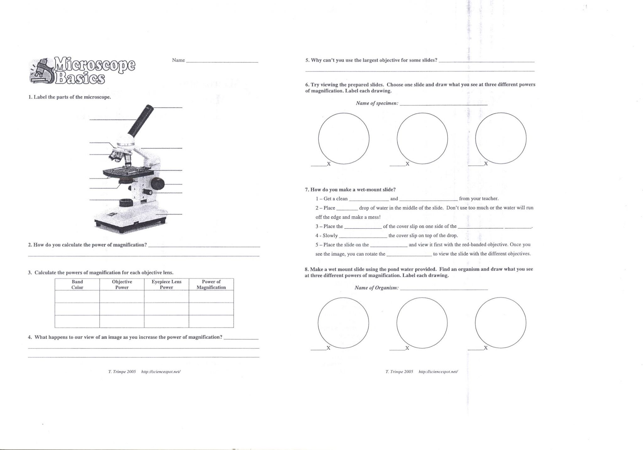 Using A Microscope Worksheet