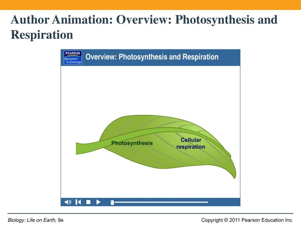 Photosynthesis Amp Cellular Respiration Worksheet