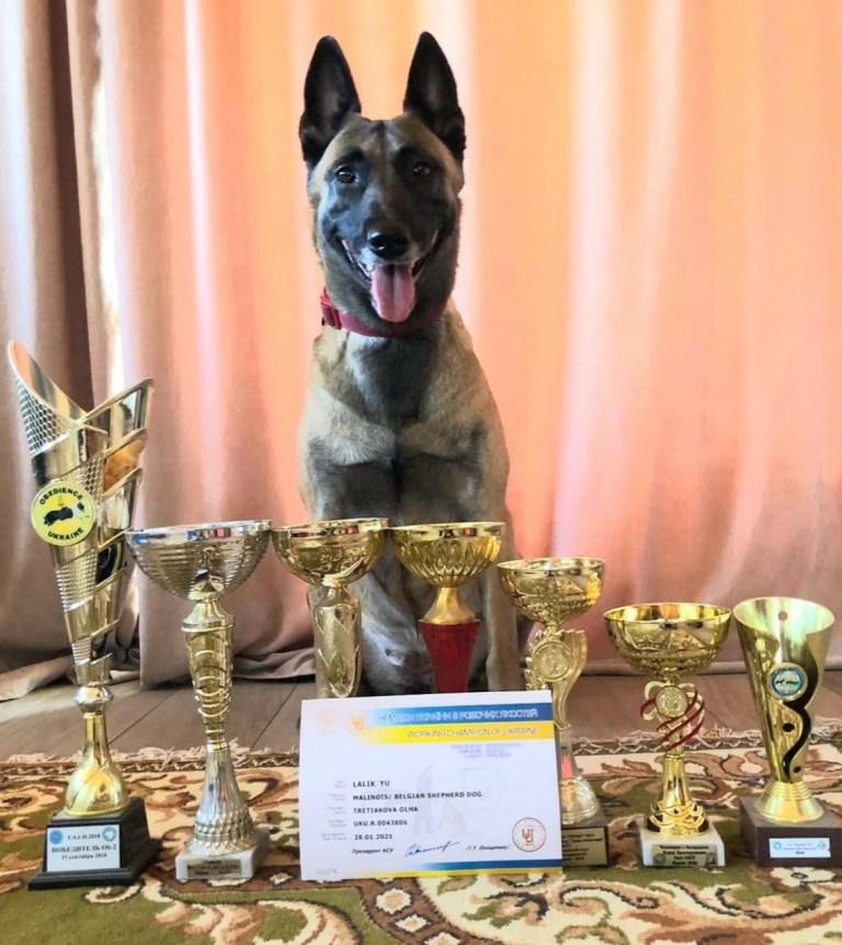 Собака кинологического отдела фирмы БРИГ заняла первое место