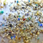 New research reveals impact of microplastics on marine wildlife