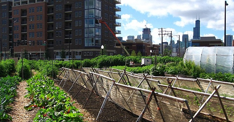 Community farm in Chicago