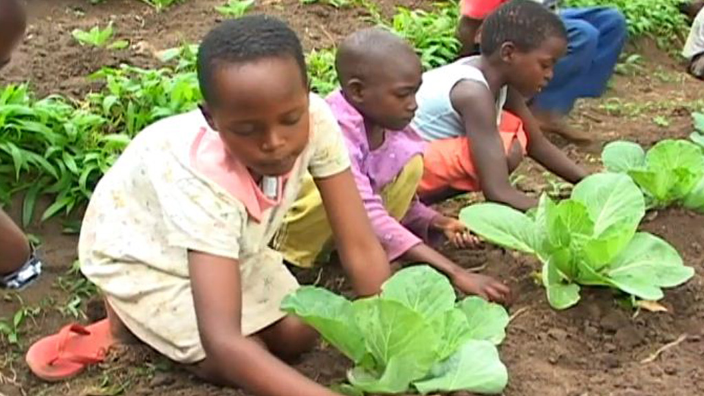 Transforming African agriculture