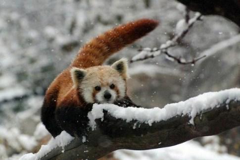 Panda-CourtneyJanney2_606