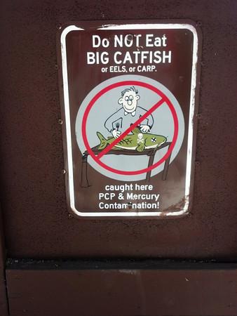 catfish-M