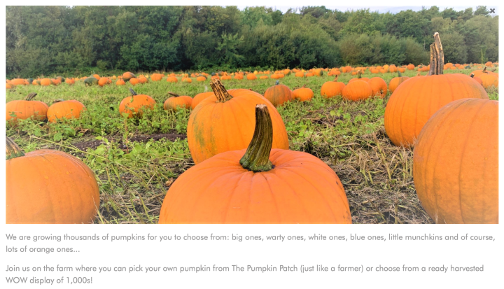 Sunnyfields Farm, Totton - a pumpkin picking experience in Hampshire
