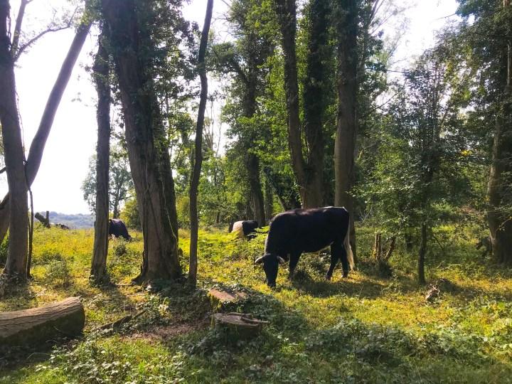 Selborne Common in Hampshire