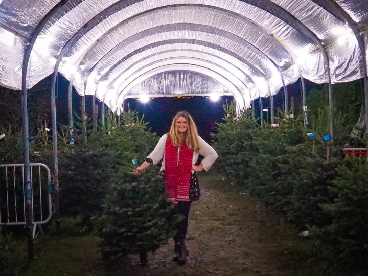 Bex at J West Christmas Trees in Titchfield, Hampshire