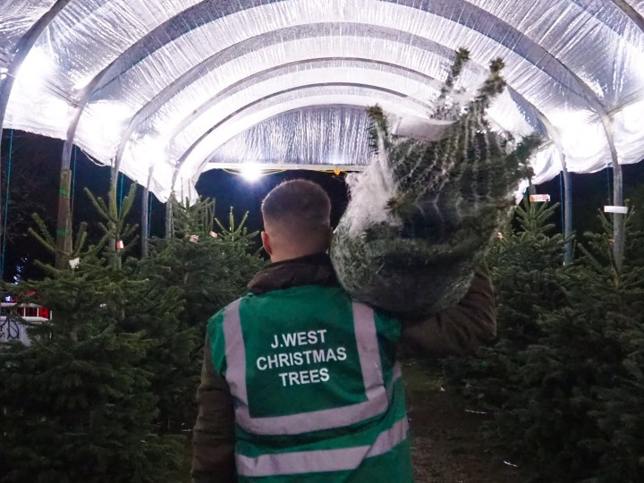 J West Christmas Trees in Titchfield, Hampshire
