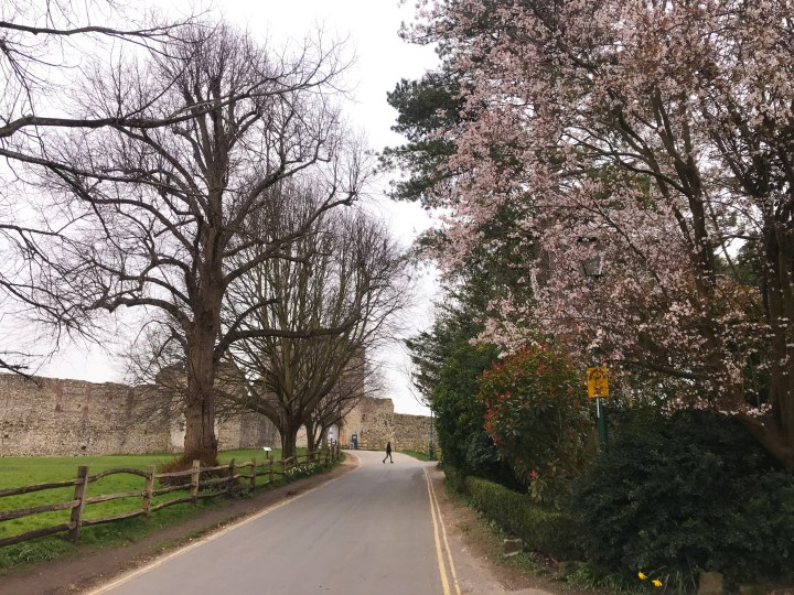 The Spring blossom on the walk around Portchester Castle