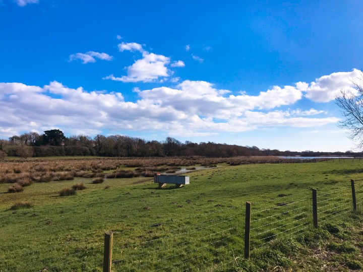 Views of the wetlands in Titchfield National Nature Reserve that runs alongside Titchfield Canal