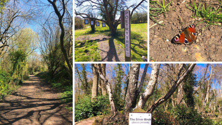 Walk around Warsash Nature Reserve