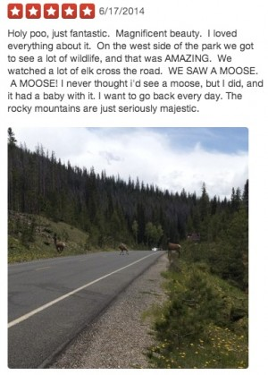 People like what they like (which is good to know). Moose, for example, are a big deal at Rocky Mountain National Park.