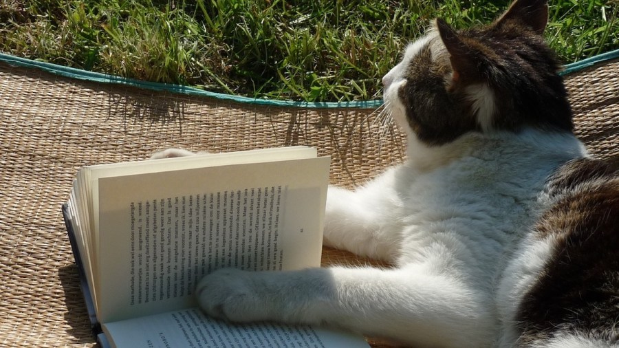 Cat reads a story