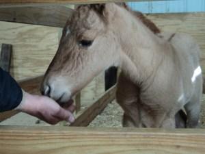 Hope the Horse