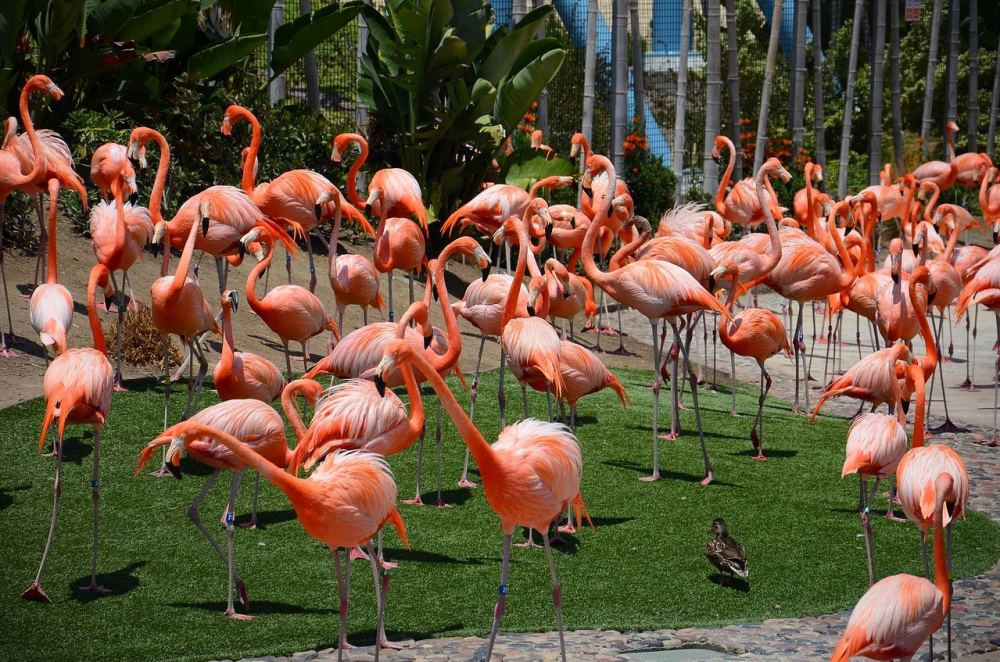 san diego zoo incentive trip