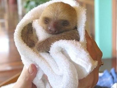sloth4