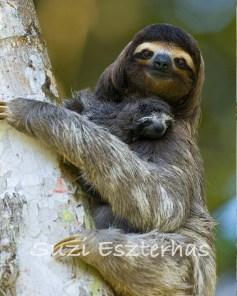 slothandbaby