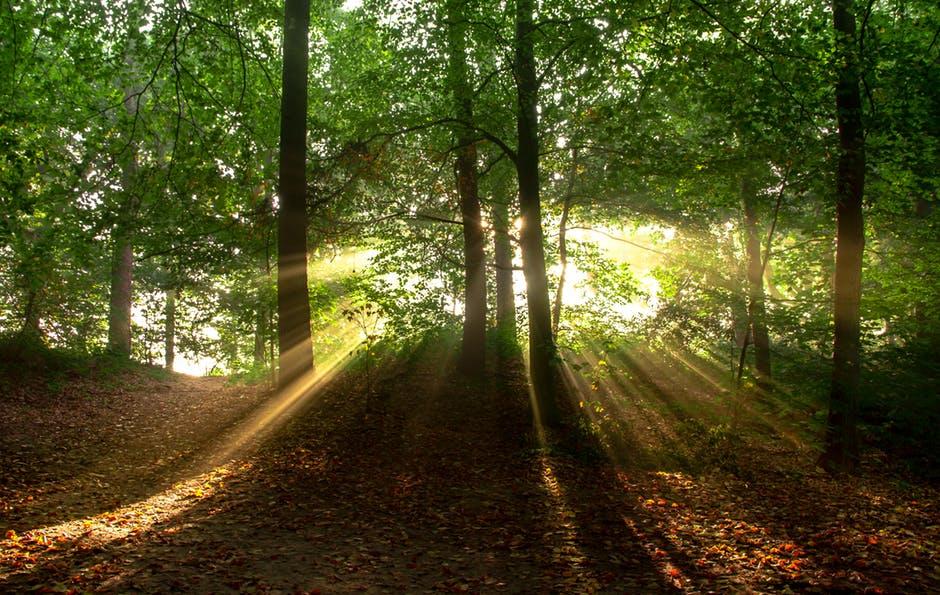BTY sun behind standing trees