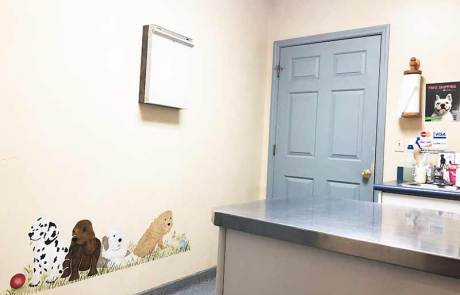 Exam Room - Bright Vet Clinic