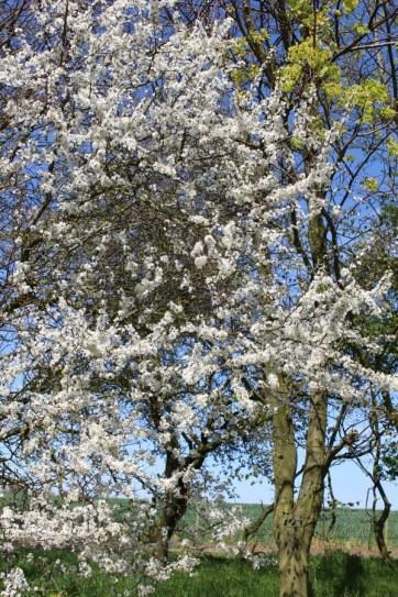brightwater gardens april blog 8