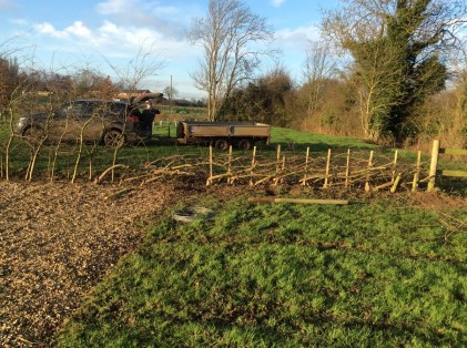 brightwater gardens saxby lincolnshire hedge conservation 5