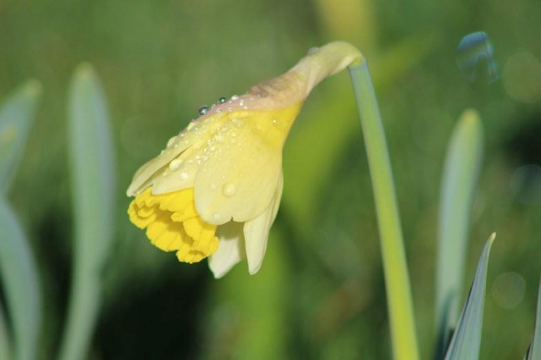 brightwater-gardens-saxby-lincolnshire-snowdrops-winter-gardens-1