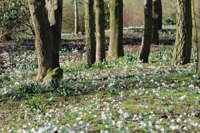 brightwater-gardens-saxby-lincolnshire-snowdrops-winter-gardens-5