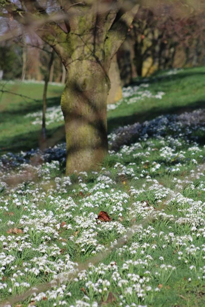 brightwater-gardens-saxby-lincolnshire-snowdrops-winter-gardens-7