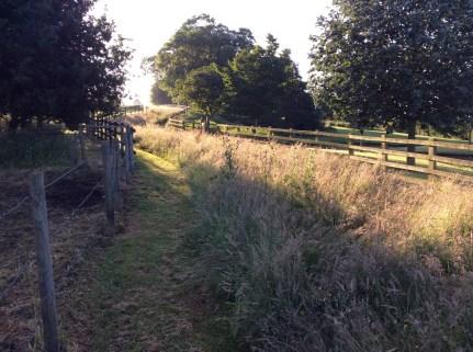 woodland-walk-2