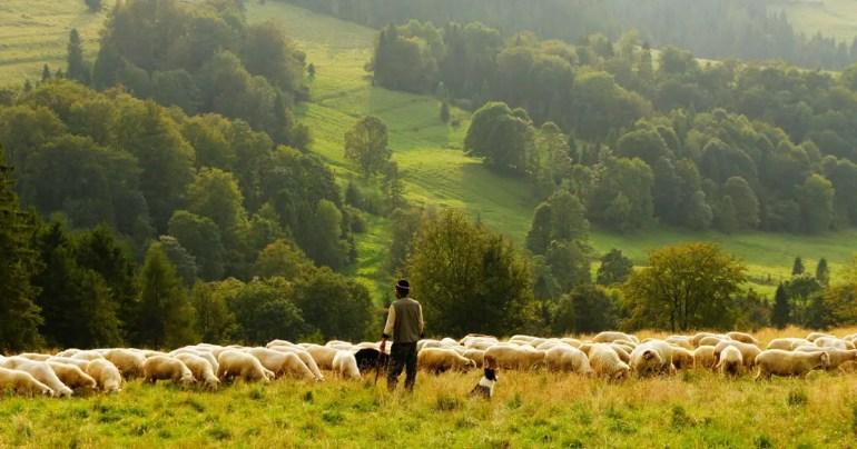 Qt 5.6 Released Sheep
