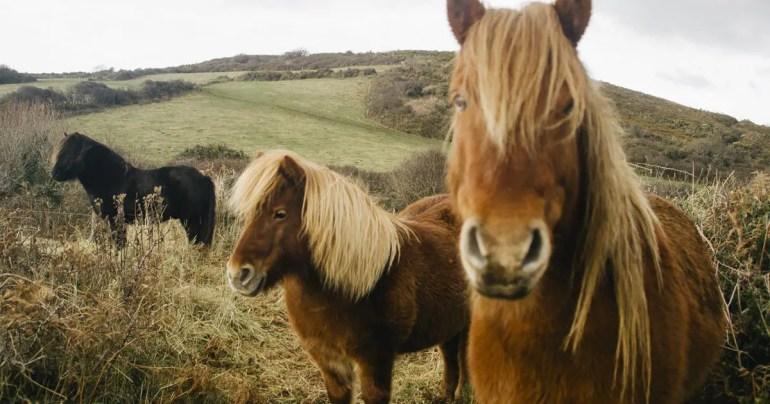 SQLite 3.13.0 Download Horses