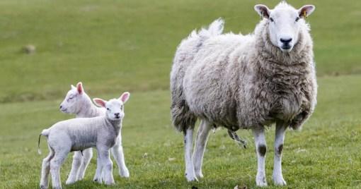 POCO 1.7.3 Release Lamb