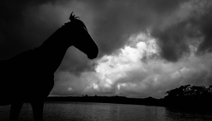 A WILD STALLION SILHOUETTE IN THE WOODS CAPTURED IN BLACK AND WHITE BY BRIJESH KAPOOR PHOTOGRAPHY