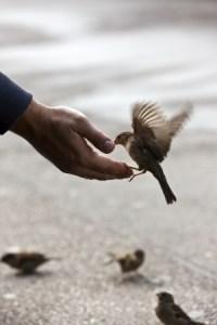 birdfeedinghand_123rf