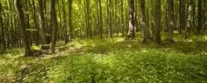 beautiful_forest_123rf