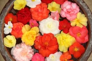 flowersbowl_KazuEnd