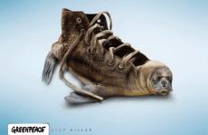 Greenpeace: basta con le uccisioni!