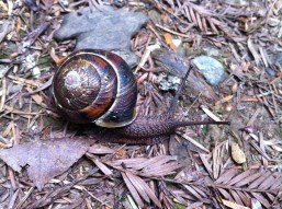 Black snail!