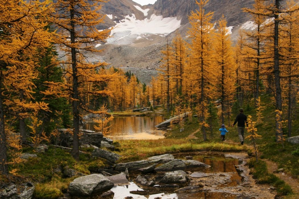 Best Fall Hikes With Kids In The Calgary Area Bring The Kids