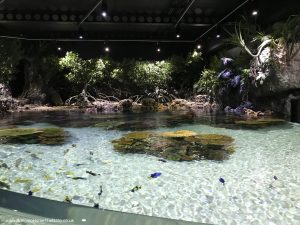 There are some great enclosures for the fish