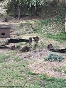 There was a lot of otters!