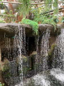Tropical World Waterfall