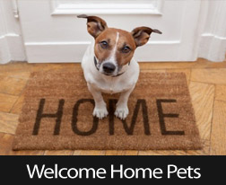 How To Keep Your Pet Safe When Moving
