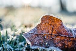 Winterizing Your Yard: 3 Landscape Tips